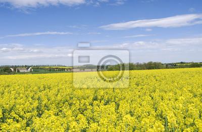 Tegwitz / Niemcy: widok na piękny wiejski krajobraz z żółtymi kwitnącymi polami rzepaku