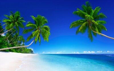 Plakat Tha palms on the white sandy beach