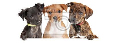 Plakat Three Cute Puppies Over White Web Banner