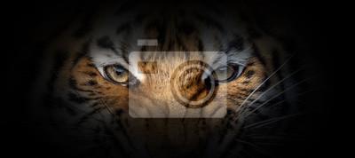 Plakat Tiger portrait on a black background