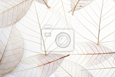 Plakat Top view of beautiful decorative skeleton leaves