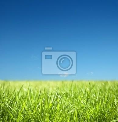 Plakat trawa i błękitne niebo