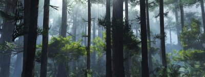 Plakat Trees in the fog. The smoke in the forest in the morning. A misty morning among the trees. 3D rendering