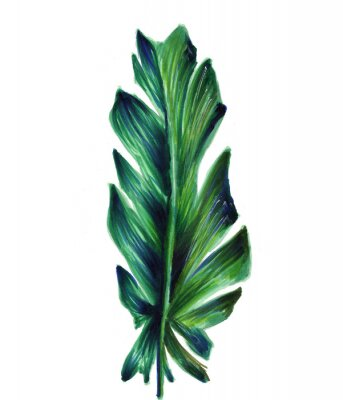 Plakat Tropical banana leaf . Botanical watercolor illustrations of the jungle, floral elements. Exotic banana leaf isolated on a white background. Beautiful illustration for textiles