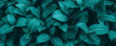 Plakat tropical leaves, abstract green leaves texture, nature background