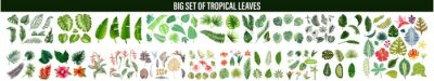 Plakat Tropical leaves collection. Vector isolated elements on the white background. set tropical leaves,  Tropical leaves foliage plant bush floral arrangement nature