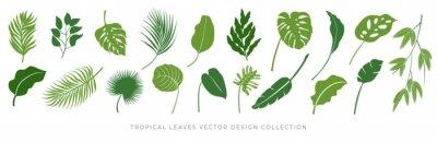 Plakat Tropical leaves vector set. Palm leaf, coconut leaf, banana leaves, monstera, fern, Botanical and Jungle leaves design for nature background, Eco and summer banner, wallpaper, pattern and prints.