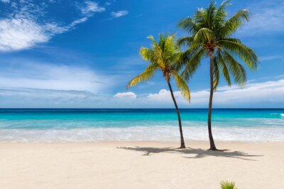 Plakat Tropical white sand beach with coco palms and the turquoise sea on Caribbean island.
