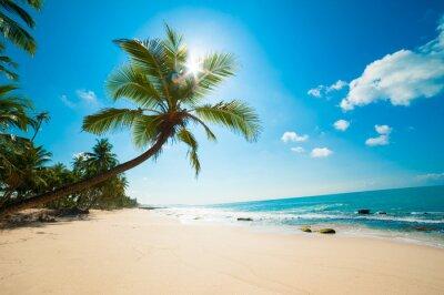 Plakat Tropikalna plaża