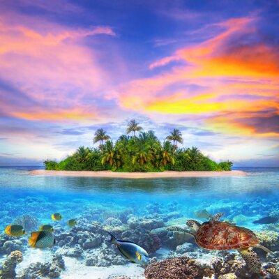 Plakat Tropikalna wyspa Malediwów z życia morskiego