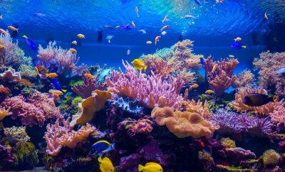 Plakat tropikalnych ryb na rafie koralowej