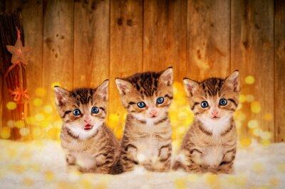 Plakat Trzy kocięta świąteczne