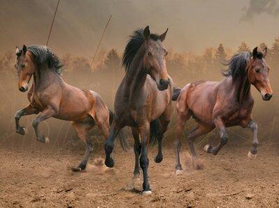 Plakat trzy konie