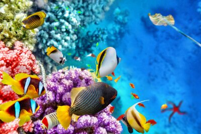 Plakat Underwater world with corals and tropical fish.