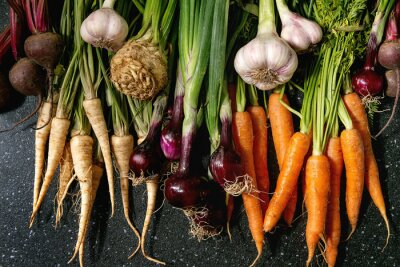 Plakat Variety of root garden vegetables carrot, garlic, purple onion, beetroot, parsnip and celery with tops over black texture background. Flat lay, space