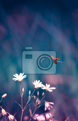 Plakat vertical natural background with little red ladybug taking off from meadow tender flowers in spring lilac evening