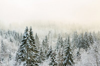 Plakat View of a forest with cold fog in winter