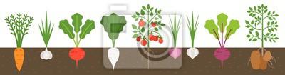 Plakat warzywo z korzeniem w strukturze gleby, płaska