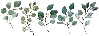 Plakat Watercolor Eucalyptus collection. Spring greenery. Wedding floral illustration.