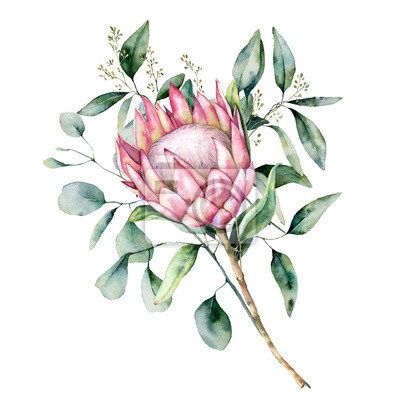 Plakat Watercolor protea bouquet with eucalyptus leaves. Hand painted pink flower with branch isolated on white background. Nature botanical illustration for design, print. Realistic delicate plant.