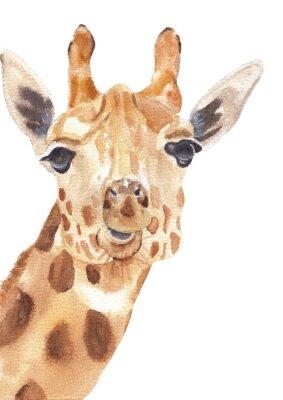 Plakat Watercolor safari animals portraits close ups: giraffe. Hand drawn hand painted posters great for wall design, pattern element, nursery decor, play room design