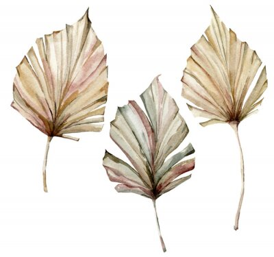 Plakat Watercolor tropical set with dry palm leaves. Hand painted exotic leaves isolated on white background. Floral illustration for design, print, fabric or background.