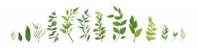 Plakat Wektorowi projektantów elementy ustawiają kolekcję zielona lasowa paproć, tropikalnych zielonych eukaliptusowych greenery sztuki ulistnienia liści naturalni ziele w akwarela stylu. Dekoracyjne piękno