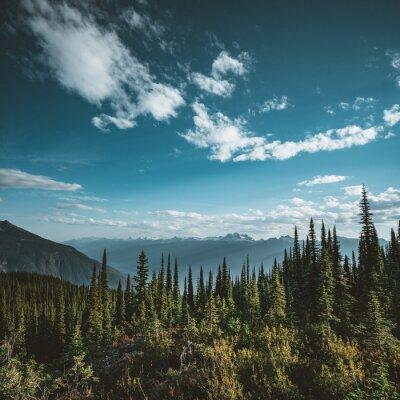Plakat Widok od góry Revelstoke przez las z niebieskim niebem i chmurami. Kolumbia Brytyjska Kanada.