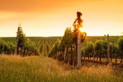 Plakat Wieczorny widok na winnice