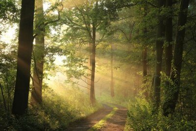 Plakat Wiejska droga przez las na czerwcowy poranek