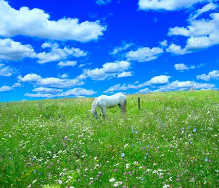 Wiejski krajobraz z polem kwiaty i pastwiskowy koń