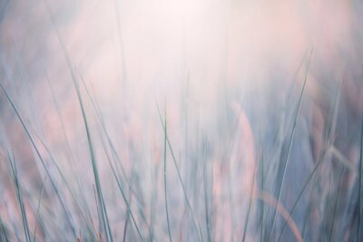 Plakat Wild grass in a forest at sunrise. Blurred abstract nature background.