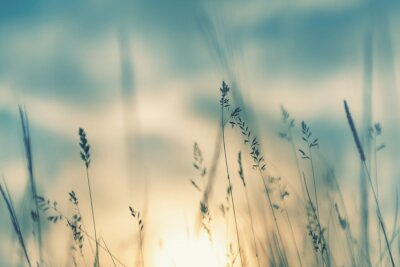 Plakat Wild grass in the forest at sunset. Macro image, shallow depth of field. Abstract summer nature background. Vintage filter