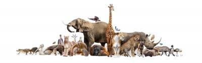 Plakat Wild Zoo Animals on White Web Banner