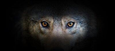 Plakat Wolf portrait on a black background