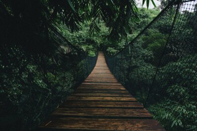 Plakat Wooden suspended bridge in a forest