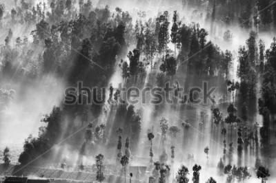 Plakat Wschód słońca w lesie blisko Bromo wulkanu, Jawa wyspa, Indonezja. Czarny i biały. Obraz zawiera pewne ziarno lub hałas