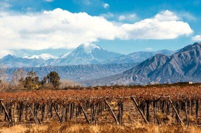 Plakat Wulkan Aconcagua i Vineyard, argentyński Prowincja Mendoza