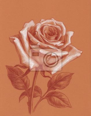 Plakat Белая роза, рисунок пастелью на цветной бумаге.