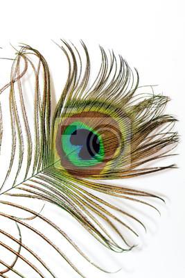 Plakat цветное и блестящее перо с хвоста павлина