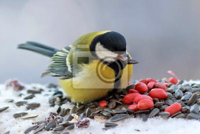 синица на кормушке грызет семечки зимой