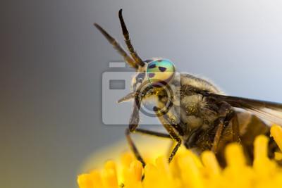 портрет овода на желтом цветке