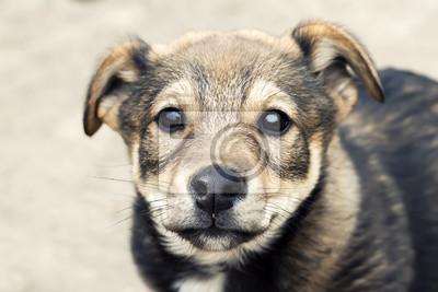 милый щенок с крупным носом
