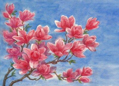 Plakat Акварель, цветущая магнолия.