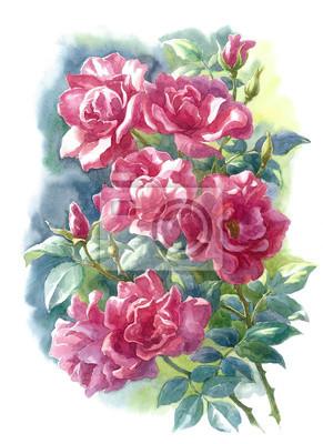 Plakat Дикие розы, акварель.