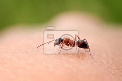 Plakat маленький муравей ползает ďî руке человека
