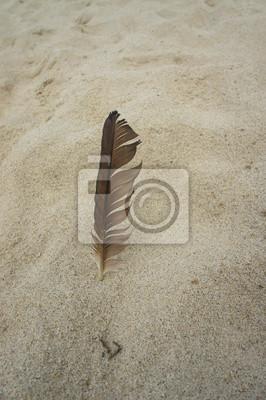перо в песке