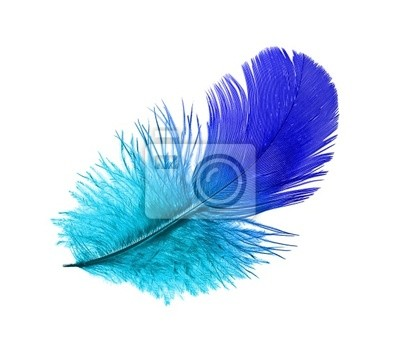 Перо синей птицы
