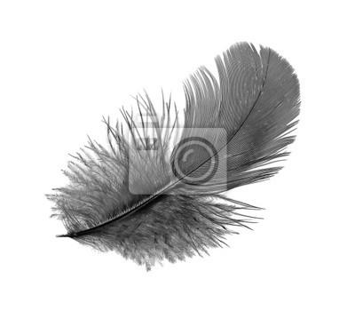 Перо черной птицы