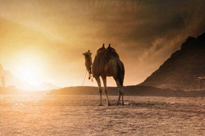Plakat Транспорт пустыни